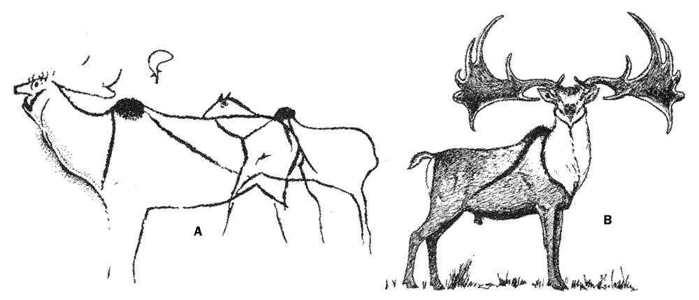 At left, the best of the  M. giganteus  images from Cougnac in France, as re-drawn by  Guthrie (2005) . At right, Guthrie's reconstruction of the animal's life appearance. Image:  Guthrie (2005) .