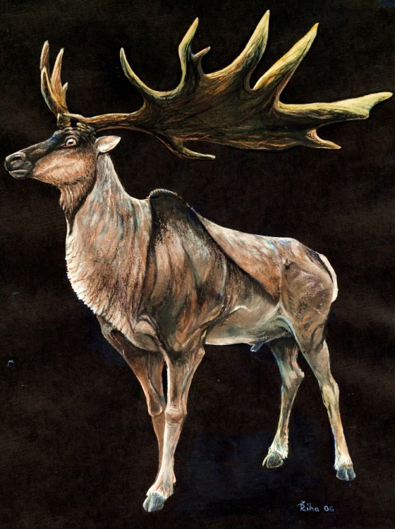 Megaloceros-appearance-2018-Pavel-Riha-wikipedia-CC-BY-SA-3-0-560-px-tiny-Sept-2018-Sept-2018-Tetrapod-Zoology.jpg?format=750w