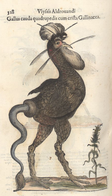 Original image of Aldrovandi's monstrous rooster, from volume 2 of his  Ornithologia . Credit: scan archived by University of Oregon ( original here ).