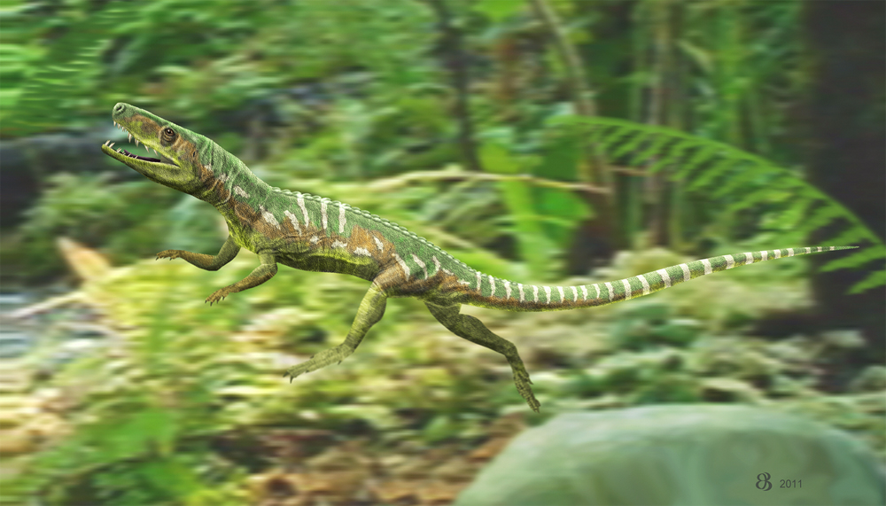 Euparkeria capensis  has long been intimated as a sort of bird ancestor by those looking for such creatures outside of theropod dinosaurs. Not only is this animal only very distantly related to birds, it's not even part of the crown-archosaur clade. Image: Taenadoman, CC BY-SA 3.0 ( original here ).