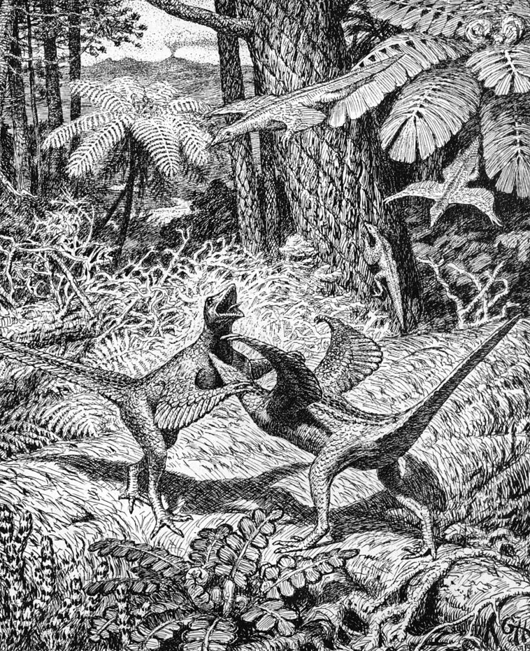 Fighting, gliding and climbing proavians, depicted in a cluttered woodland environment, by Gerhard Heilmann. This is typical of Heilmann's many excellent scenes. He used posed plaster models of the creatures before drawing. This illustration was used in the 1916 Danish version of the book (it first appeared in one of his 1912 articles) but does not appear in the 1926 English version. As we'll see below, the decision to exclude some images from the 1926 version might have served to make it seem more scholarly than its predecessor. Image: Heilmann (1916).