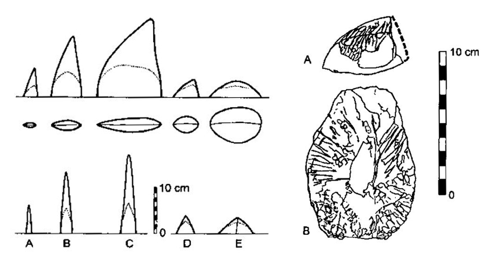 The conical and semi-conical dermal spines of some diplodocids were variable in height, breadth and shape, as illustrated here. Image: Czerkas (1994).