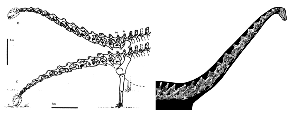 Were sauropod necks mostly semi-horizontal and with a limited range of motion, as argued by Martin (1987) and illustrated at left? Nope; it's more likely that the necks were often held aloft and far more flexible, as argued by  Taylor  et al . (2009)  and depicted at right. Images: Martin (1987),  Taylor  et al . (2009) .