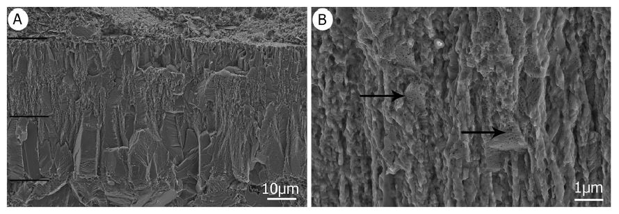'Geckoid eggshell' in the Oarda de Jos assemblage, as seen via SEM. The images (note the different scales) show (A) a distinct two-layered structure and (B) numerous tiny holes in the prisms of the second later. Image:   Fernández  et al . (2019)  .