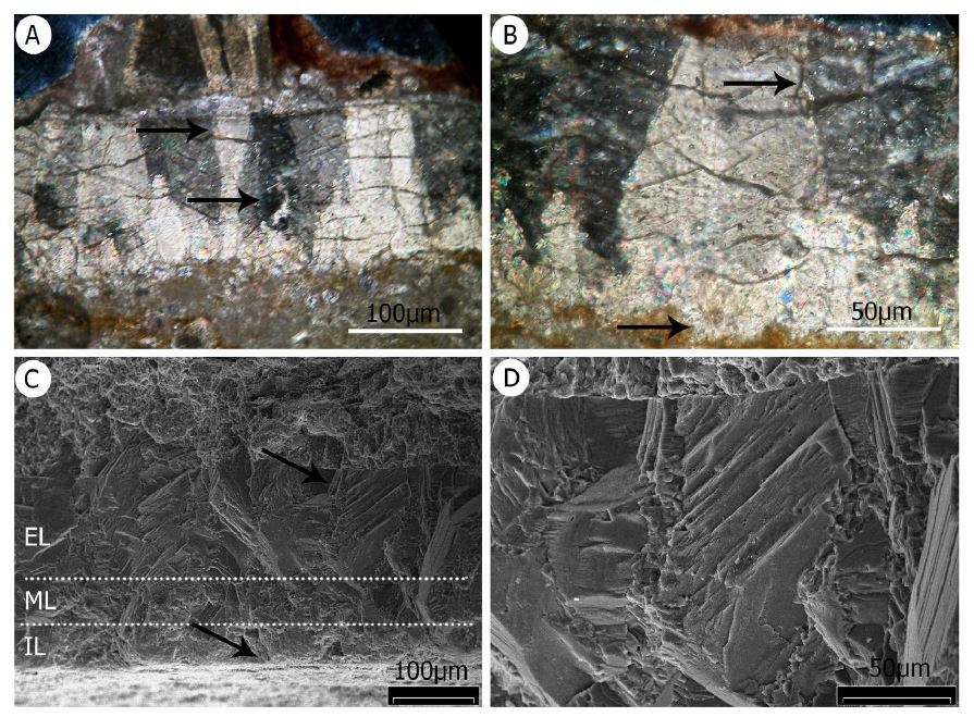 Examined under microscopes (A-B show thin-sections viewed with a standard light microscope; C-D views from the SEM), eggshell fragments look like this. These images show the crocodylomorph eggshell in the assemblage. Image:   Fernández  et al . (2019)  .