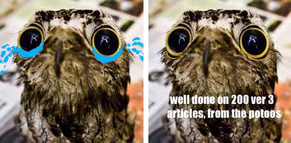 It's true, I'm guilty of using potoos in memes myself. The one at left was my profile picture on social media for a while; the one at right appeared at TetZoo ver 3. The original photo has been memed a lot. The original photo is sometimes credited to Kristin Lundquist, though that's not where I got it from. Image: (c)  Kristin Lundquist .