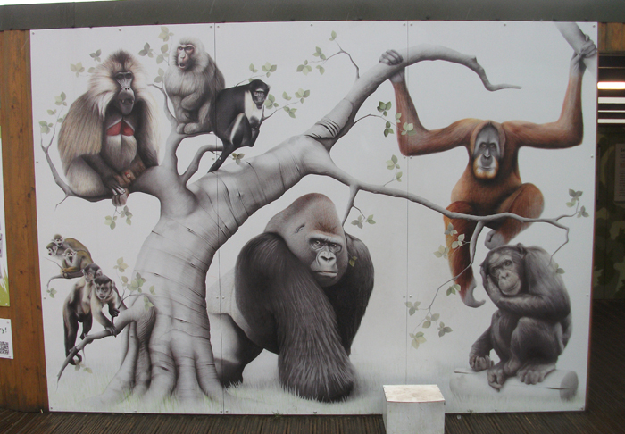 Hominids - represented here by a gorilla, orangutan and chimpanzee (the human needed to complete the scene is missing) - are different from other anthropoid primates in many important aspects. What particular adaptational history caused them … us… to be so different? This mural is on show at Edinburgh Zoo, Scotland, and is by Russell Dempster. Image: Darren Naish.