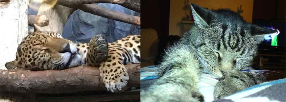 The sleeping behaviour of some animals is quite familiar to us. Other animals? — less so. Images: Malcolm Daniel, used with permission (left), Darren Naish (right).