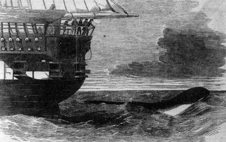 Classic sea monsters like this one - the  Daedalus  encounter from 1848, involving a creature seen off the coast of Namibia in the south-east Atlantic - have often been regarded as inexplicable, and as evidence for the reality of sea monsters. But they might be explainable after all. Image:  Illustrated London News , in public domain.