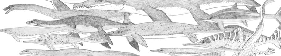 Has an increasing familiarity with Mesozoic marine reptiles - like the various sauropterygians, ichthyosaurs and kin shown here - influenced people's ideas on their sightings of modern sea monsters? These illustrations are among the many I've done for my in-prep textbook,   on which go here  . Image: Darren Naish.