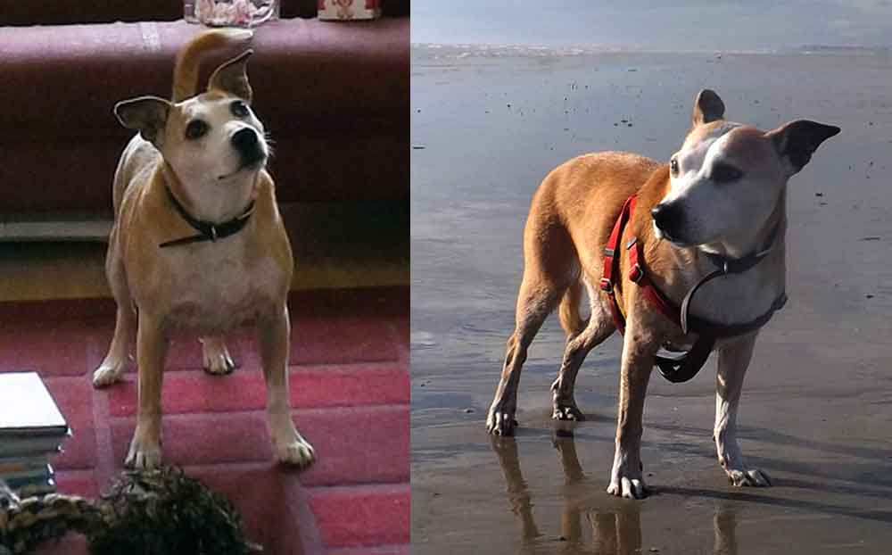 At left: Willow (with rope toy) waits for commands from Toni; a photo from 2014. At right: a trip to the beach.