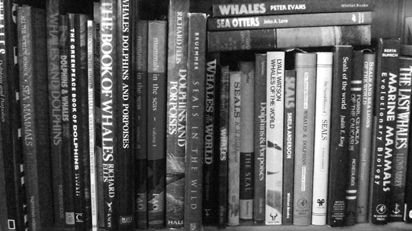 Of all the popular and semi-technical books on cetaceans and other marine mammals,   Watson (1981)   remains one of the most interesting and attractive. This photo is from 2015 and I've acquired quite a few additional relevant volumes since. Image: Darren Naish.