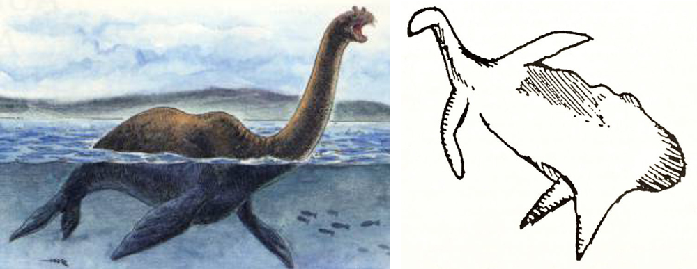 So - is that Cosquer Cave animal a depiction of the long-necked mega-seal  Megalotaria ? Err, wouldn't  Megalotaria  have to actually exist first? Images:  Megalotaria  (c), Stefano Maugeri (from  here ); Cosquer Cave animal from Mysterious Universe ( here ).
