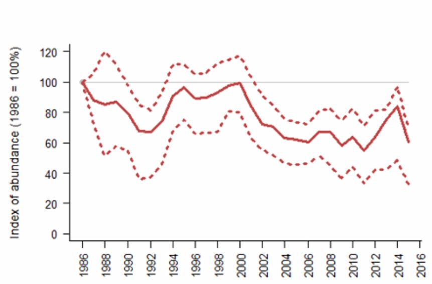 There's some degree of uncertainty as goes how reliable urban Herring gull counts are, but the overall trend over recent decades is certainly one of overall population decline. This graph is from the Joint Nature Conservation Committee Herring gull page. The dotted lines show 95% confidence limits. Image: JNCC (original   here  ).