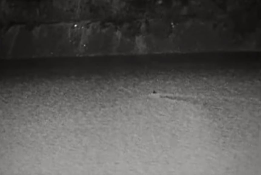 A screengrab from the approximately 1 minute long Dinsdale film of April 1960. The dark object was thought by Dinsdale to be the mahogany brown, 'peaked' back of a massive aquatic animal. Image: (c) Tim Dinsdale.