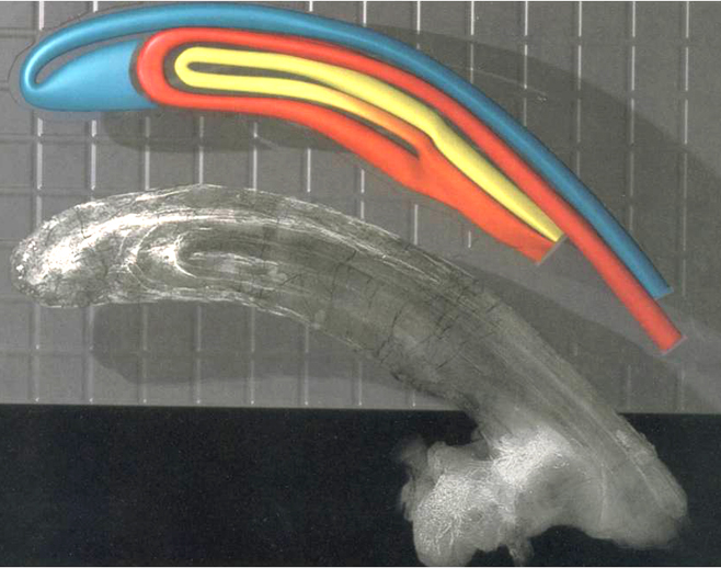 It's well known that the crests of lambeosaurine hadrosaurs were hollow, and contained connected internal tubes and chambers. Were these used in the production of fire? No. Image: Sullivan & Williamson (1999).