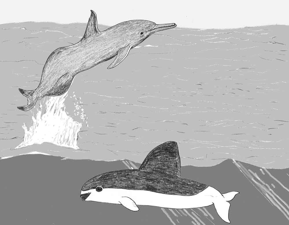 I'm going to build a montage of the extreme cetaceans discussed in this series. This image will become more cluttered over time. Image: Darren Naish.