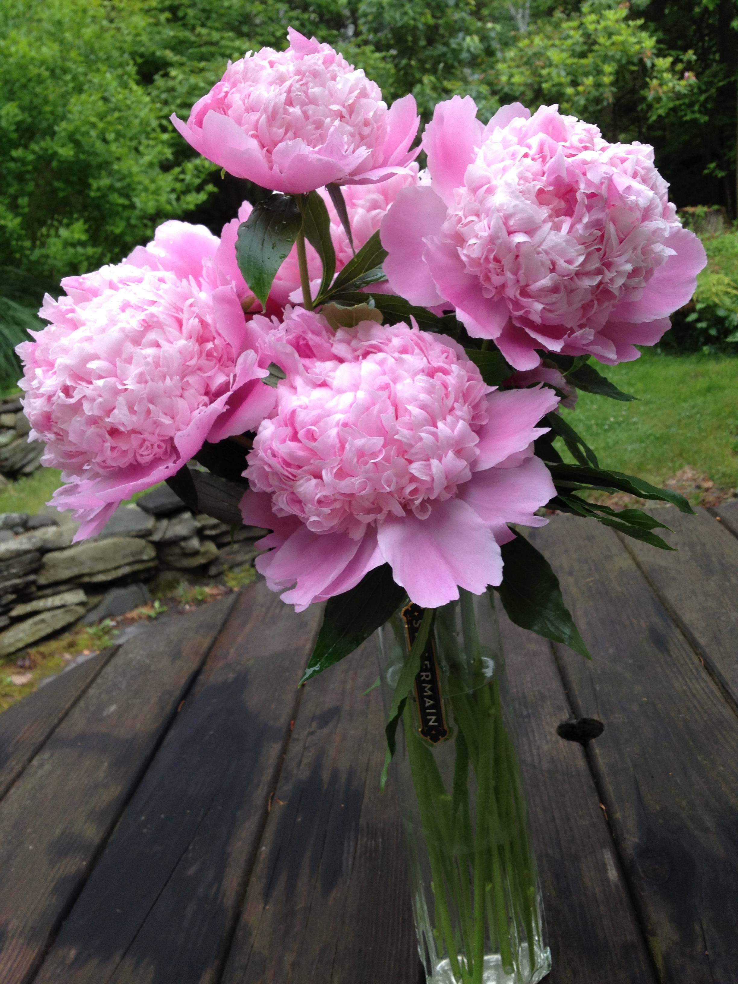 Grew these in my garden!
