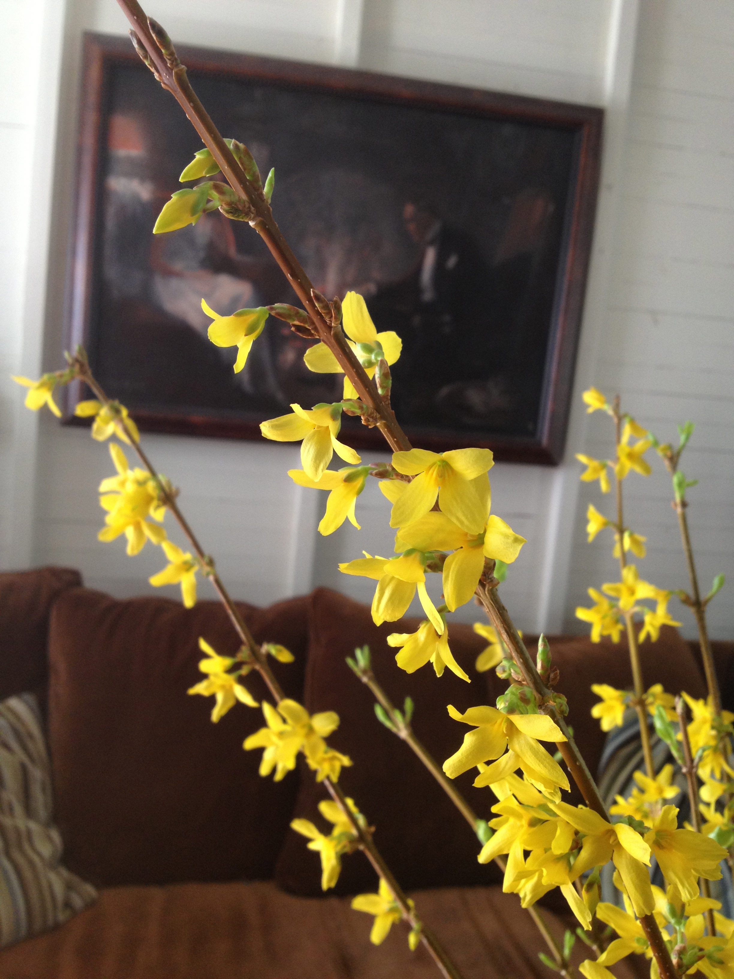 Forsythia Close Up After.jpg