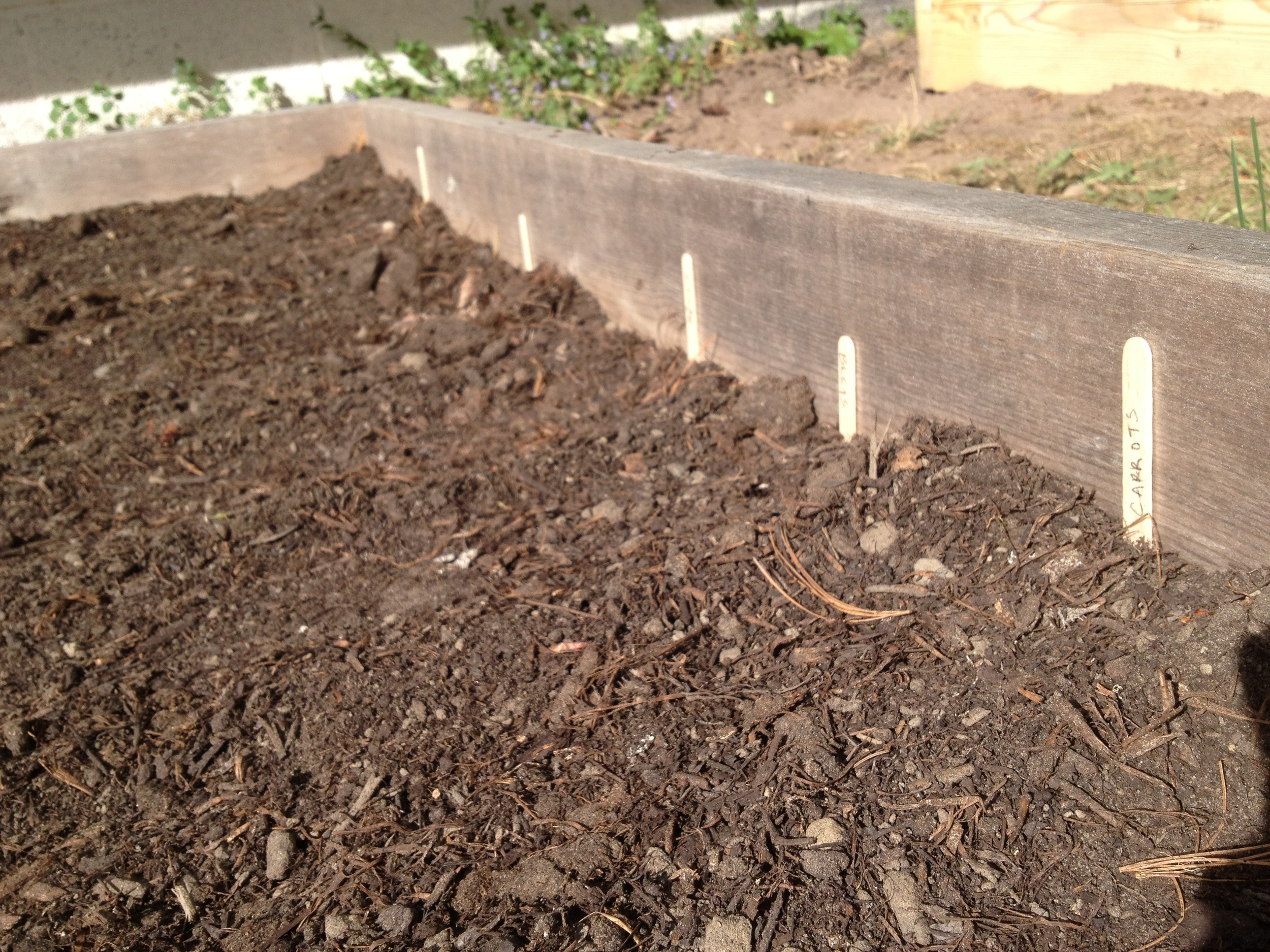 I used popsicle sticks to mark the rows.  Now that the plants have sprouted, it's easy to tell what they are.  But it's a good place holder while you're waiting.  Don't want to double plant a row!