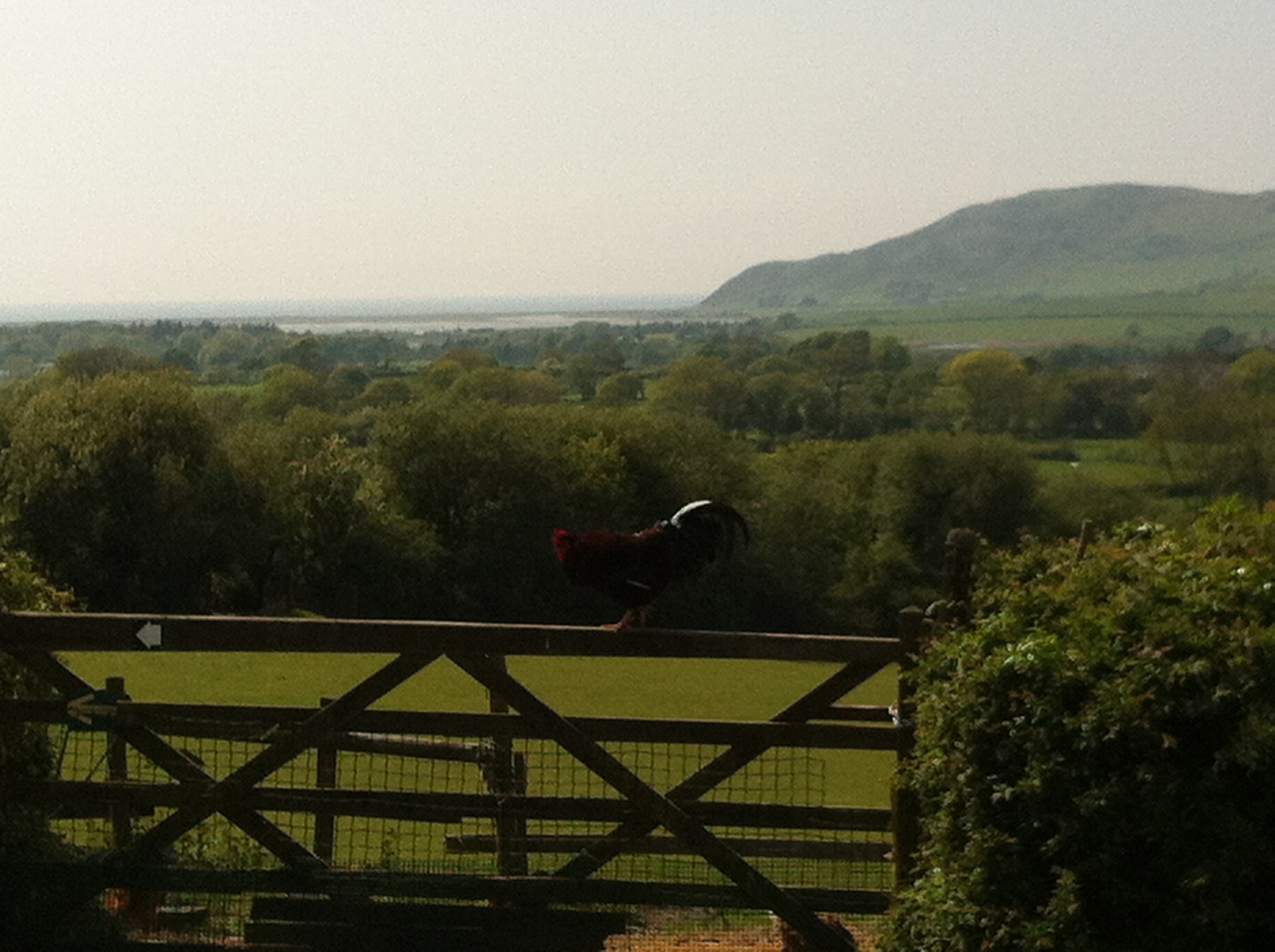 The view from Tynllywn Hen.