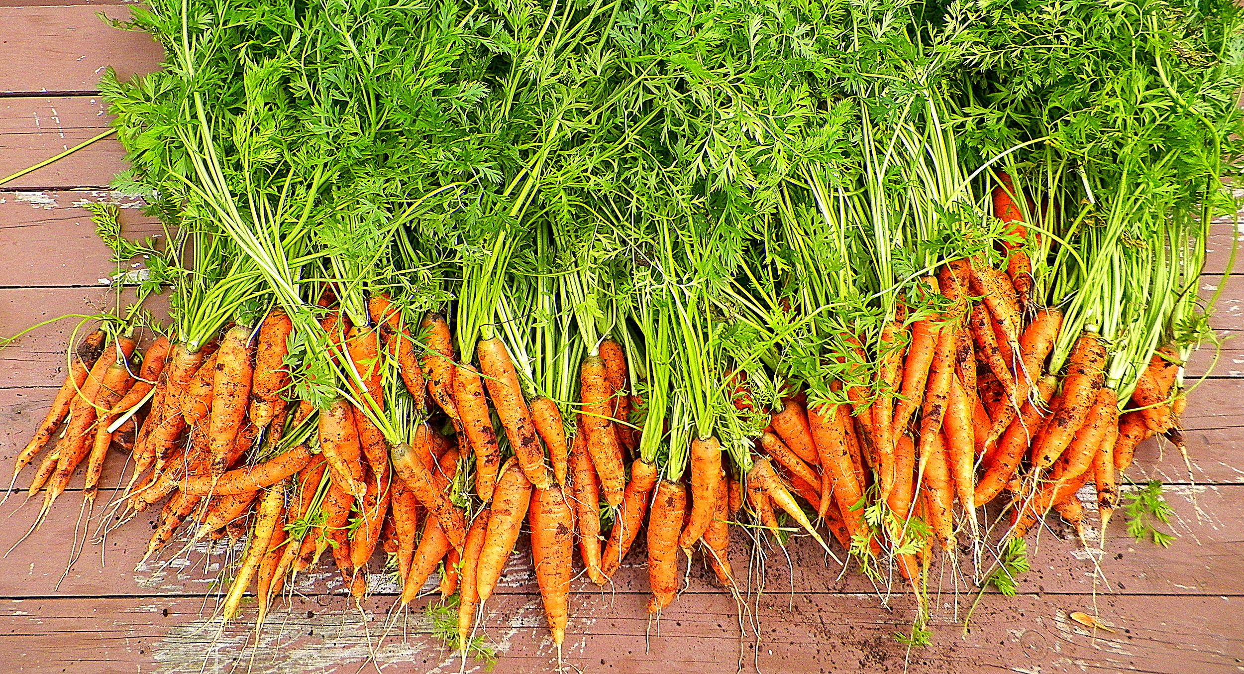 Carrots - Short&Sweet and Scarlet Nantez.