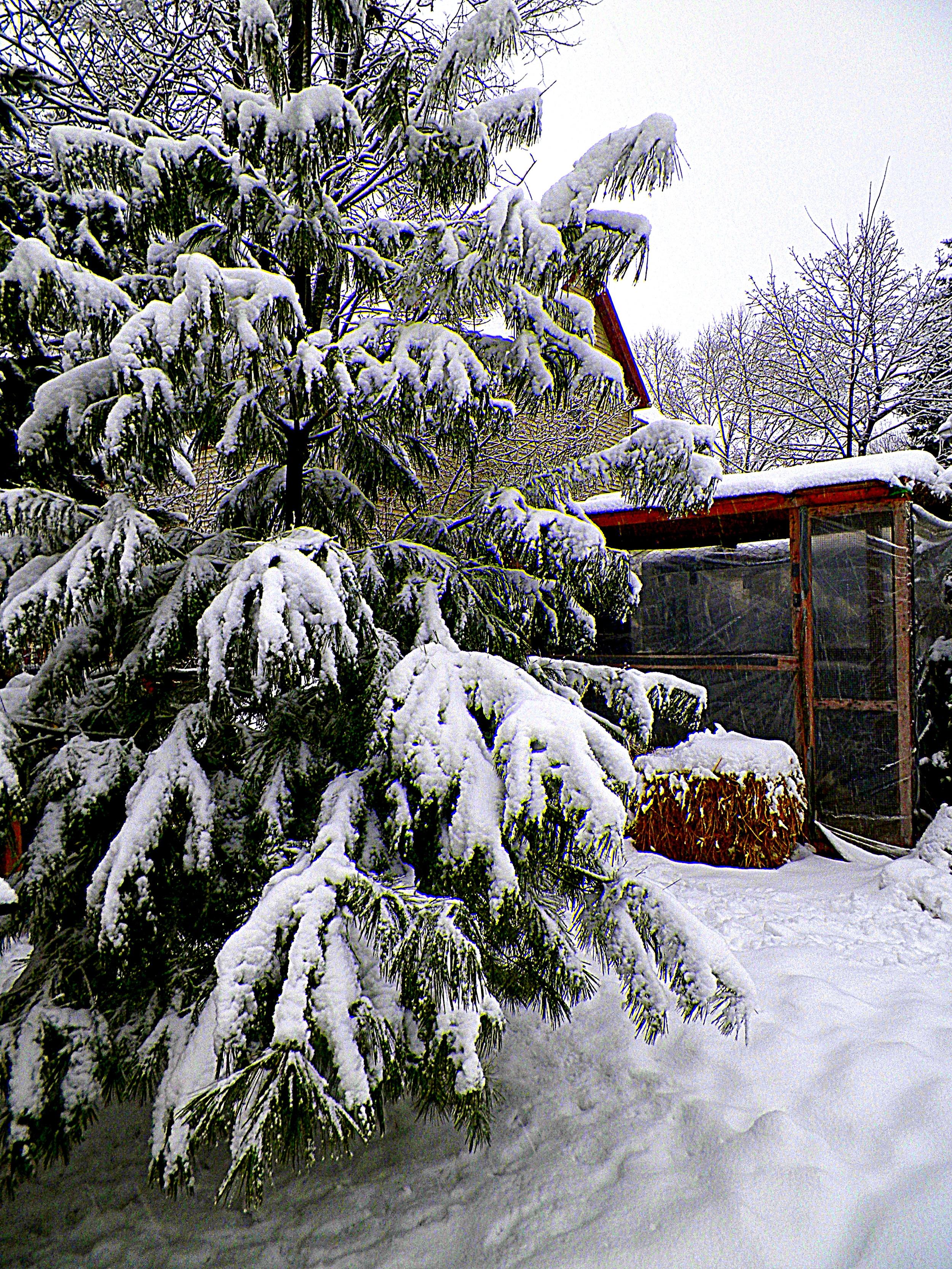 snow duck coop  2-7-13.JPG