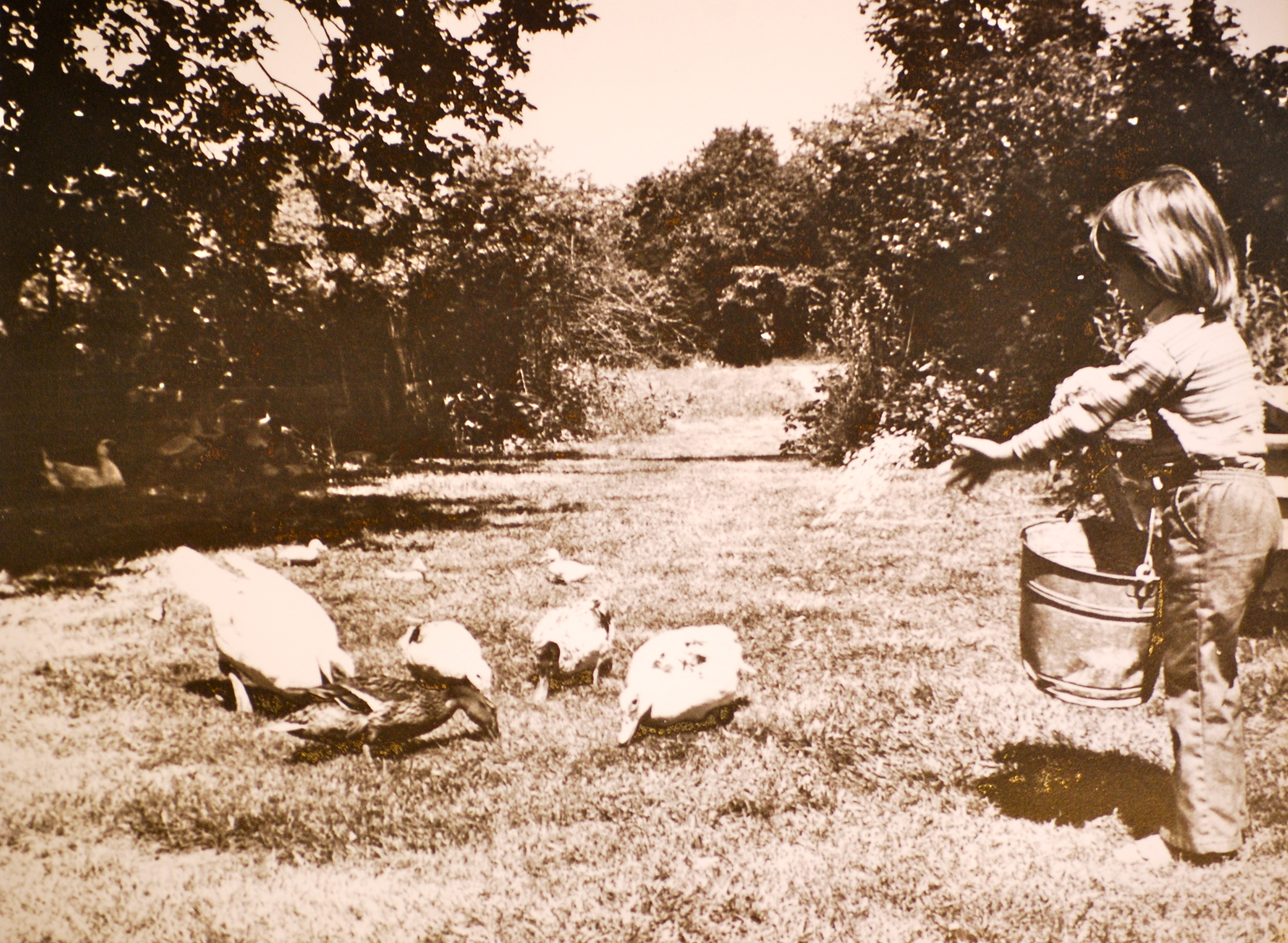 Shelly Feeding Ducks