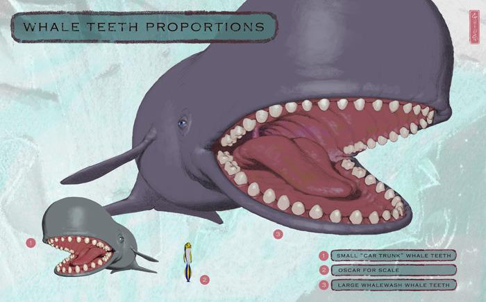 whale_teeth.jpeg