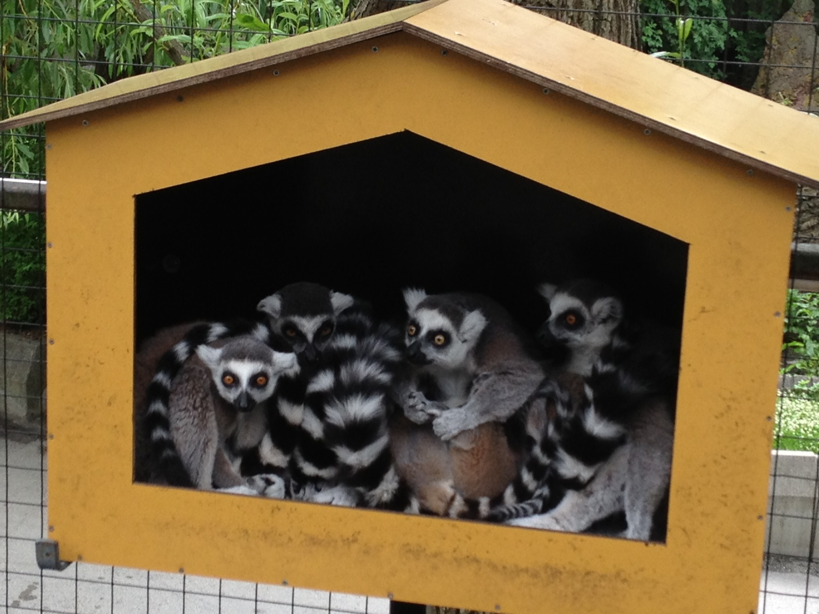 the house of lemurs
