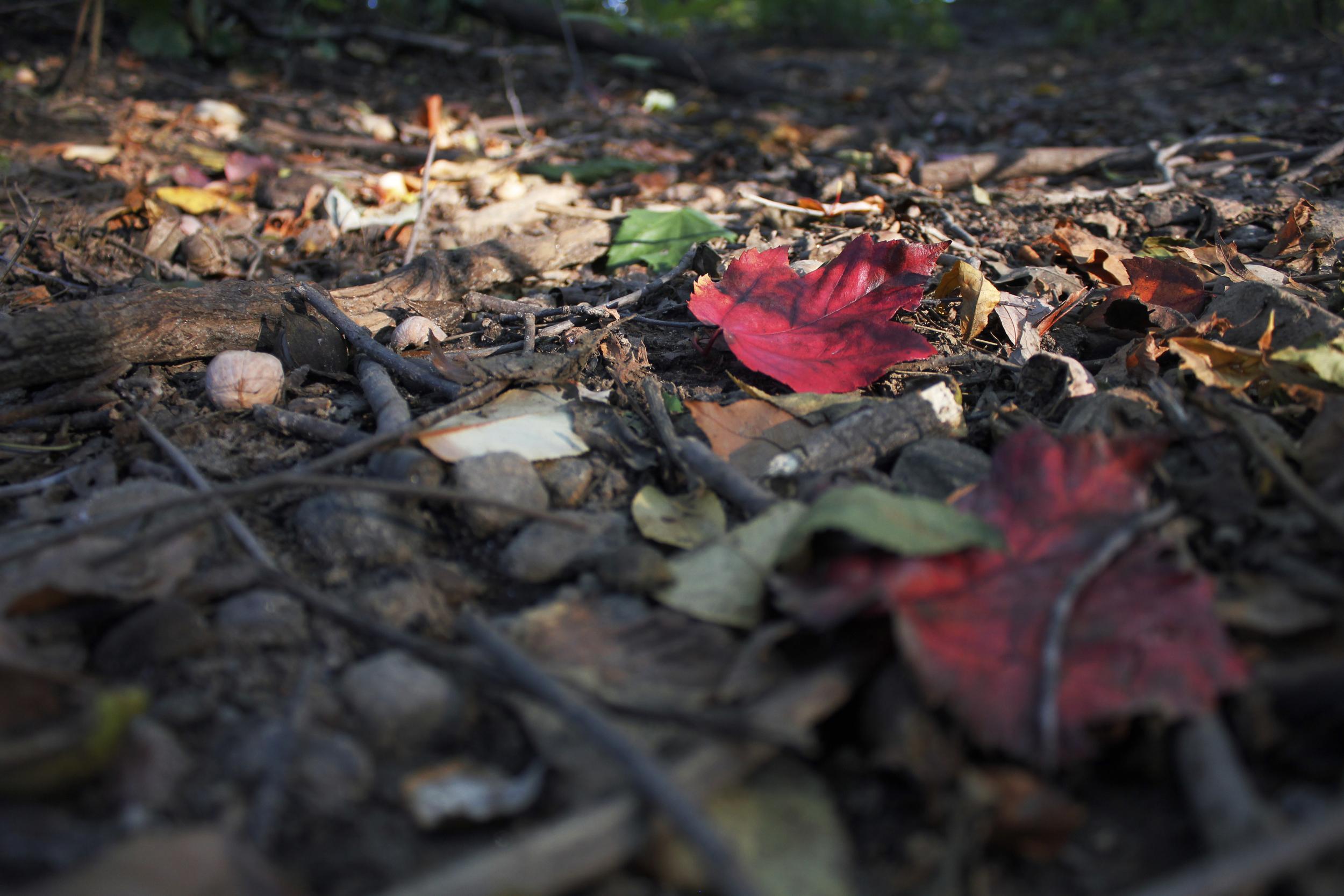 = fall.jpg