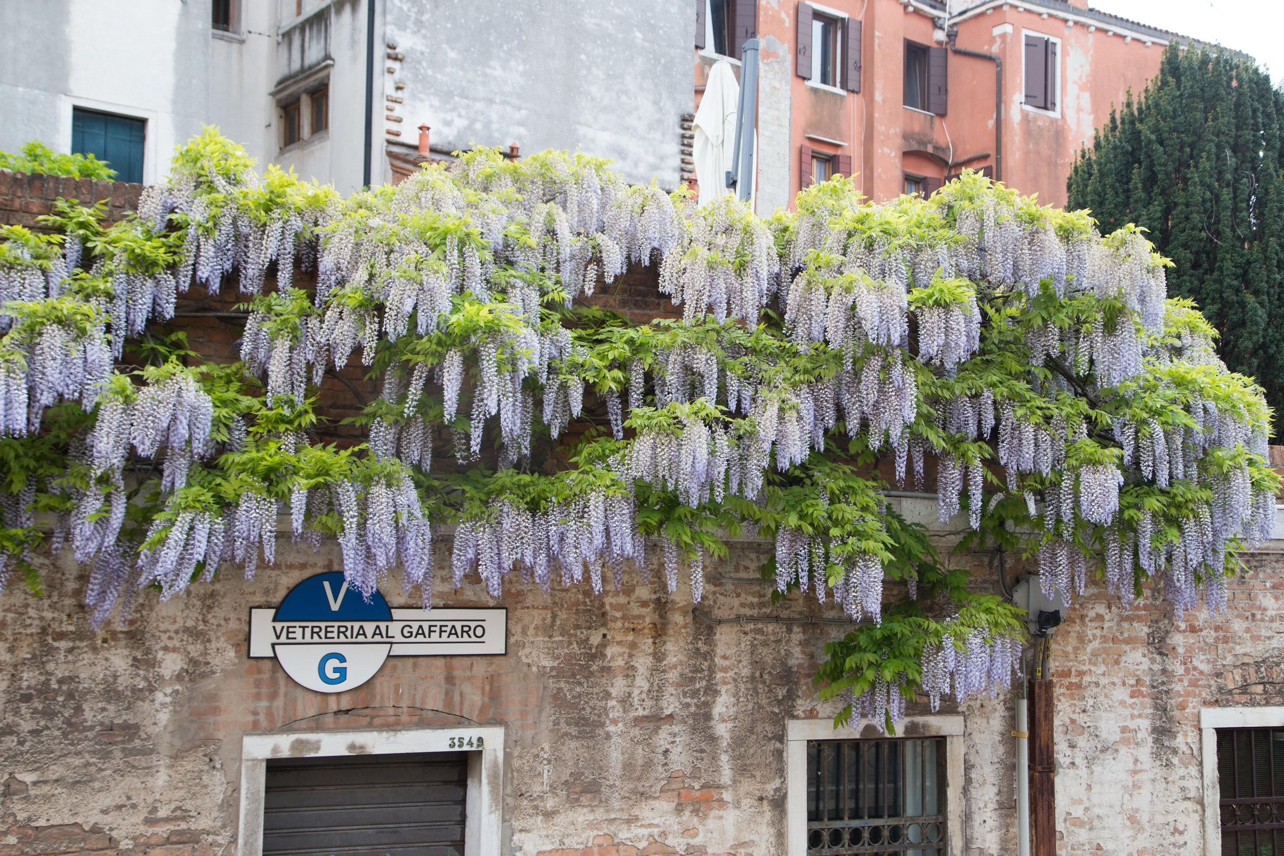 Venice-39.jpg