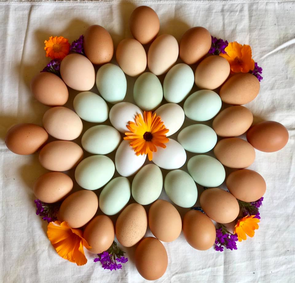 Happy Easter - From Tara Firma Farms