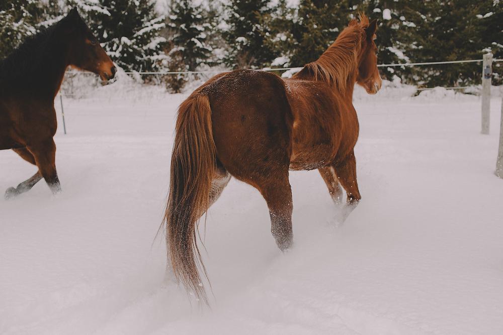 Horses019.JPG