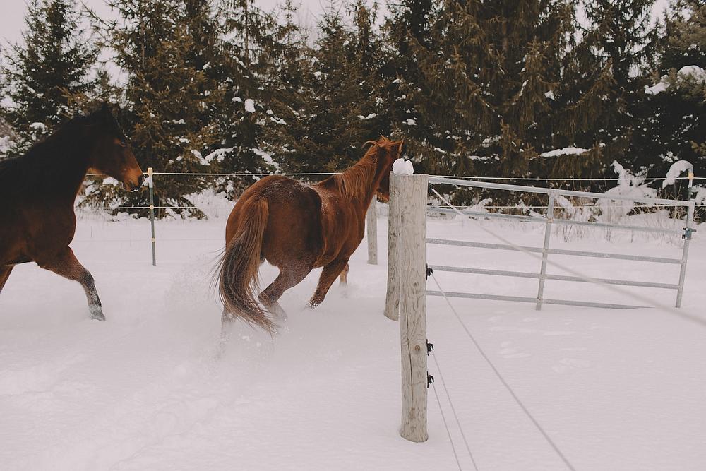 Horses020.JPG