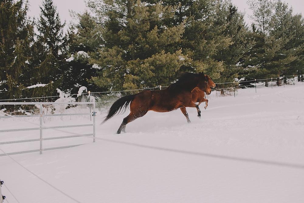 Horses022.JPG