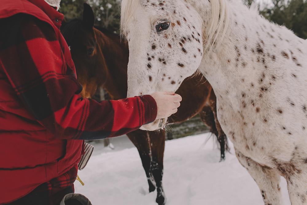 Horses042.JPG