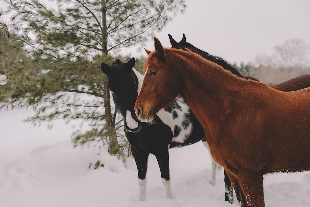 Horses050.JPG