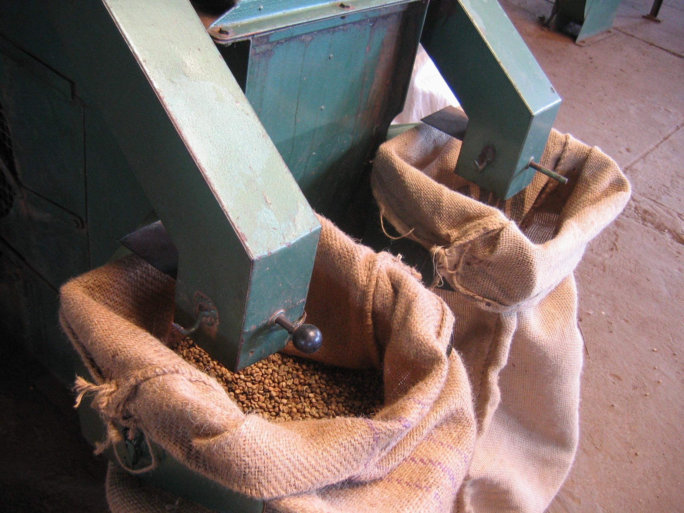 Séchage, nettoyage et calibrage du café Robusta