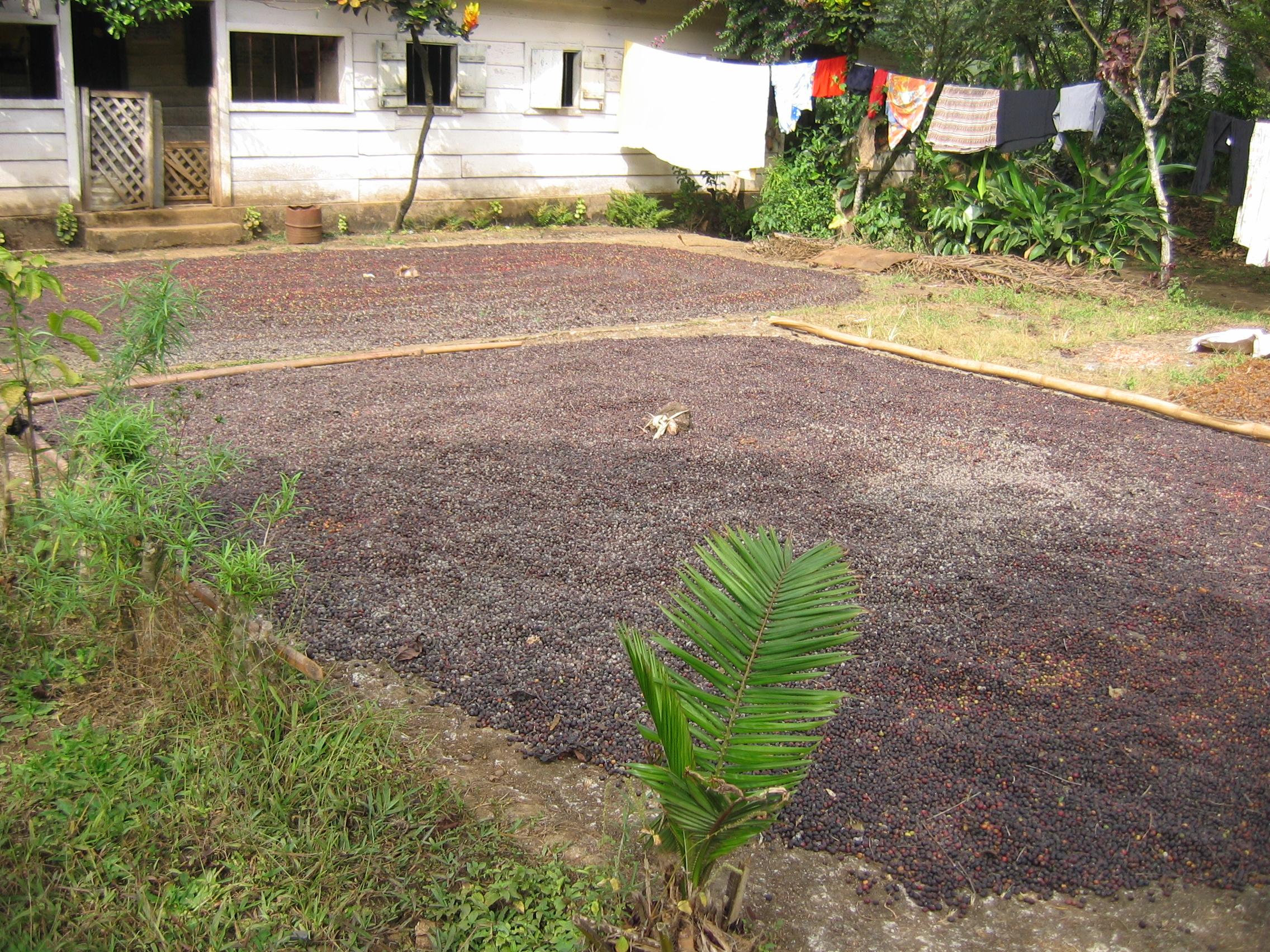 Aires de séchage naturel dans un village
