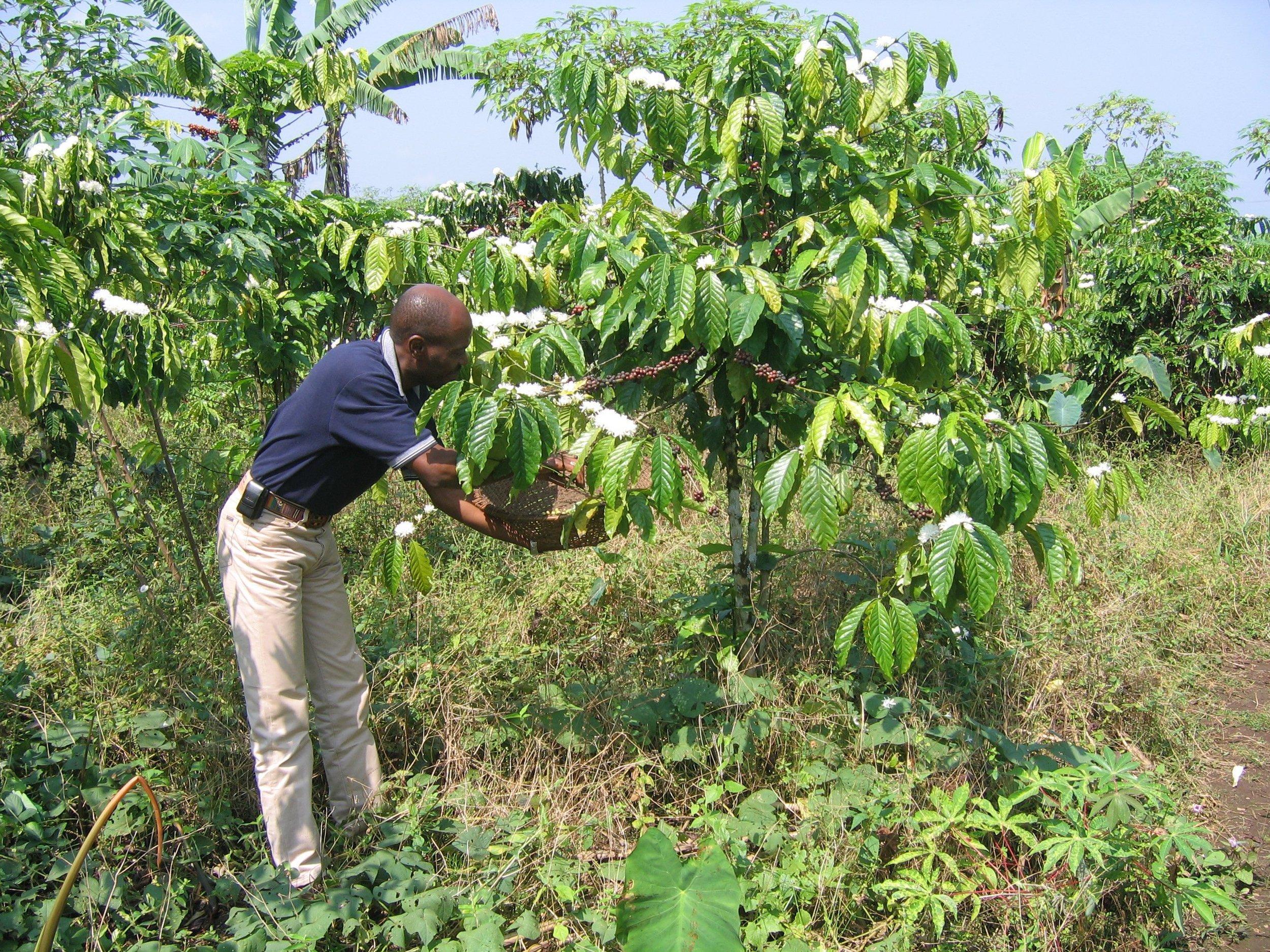 Apparition des fruits 9 à 11 mois après la floraison