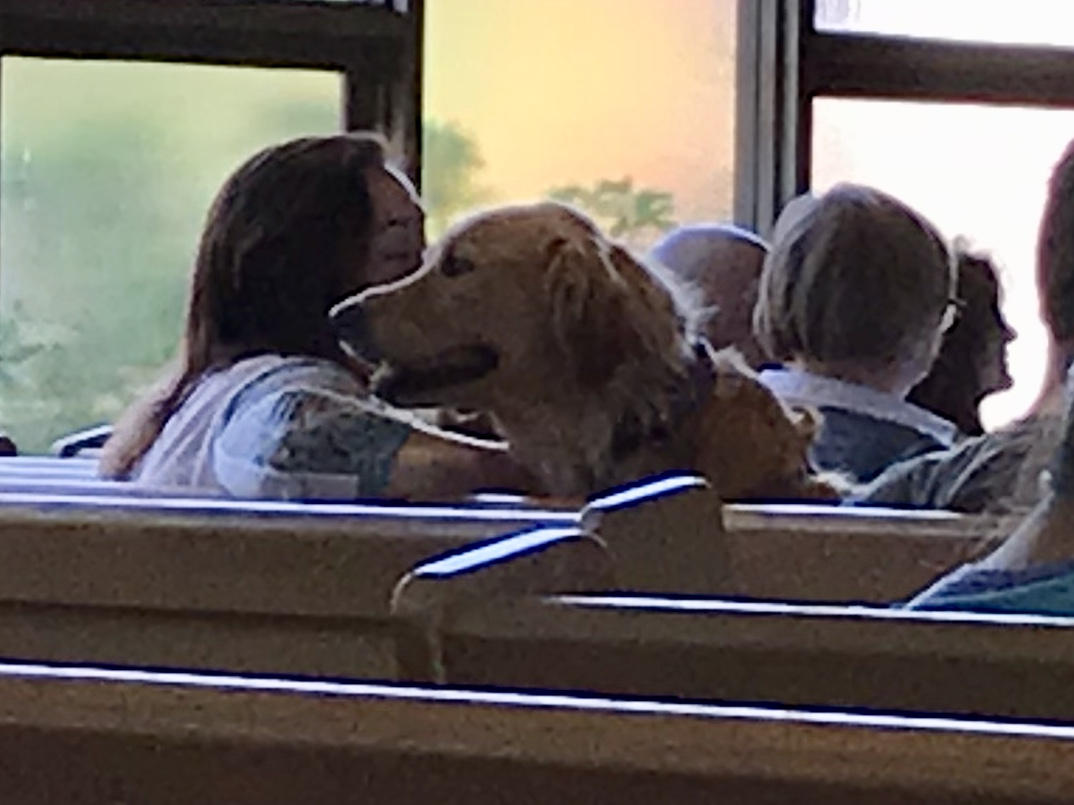 Click    HERE    to Read a Homily delivered by the Rev. Dr. Kelly Murphy Mason on 10/14/18 when we celebrated the animals in our lives.