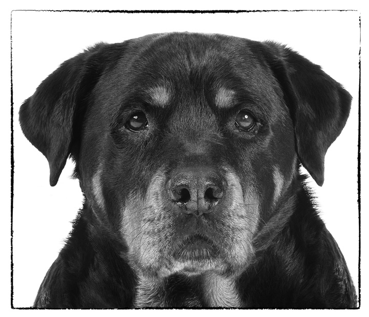BIPP NW Pet Portrait Silver Award Winner