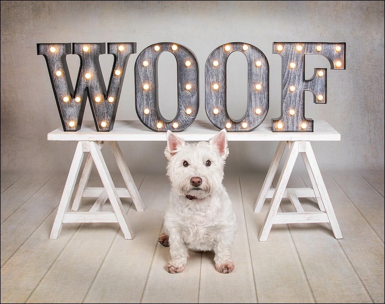 Dog Portrait Westie 01.jpg