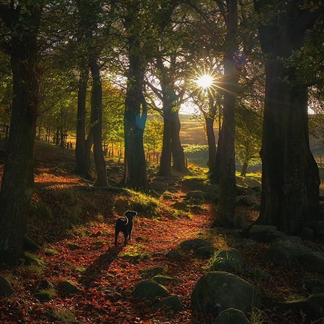 Autumn Light in an Autumn Landscape. #saddleworth #greenfield #coloursofautumn #autumnlandscapes #Oldham #landscapephotography #leica #leicauk #summilux35mm #leicaphotography