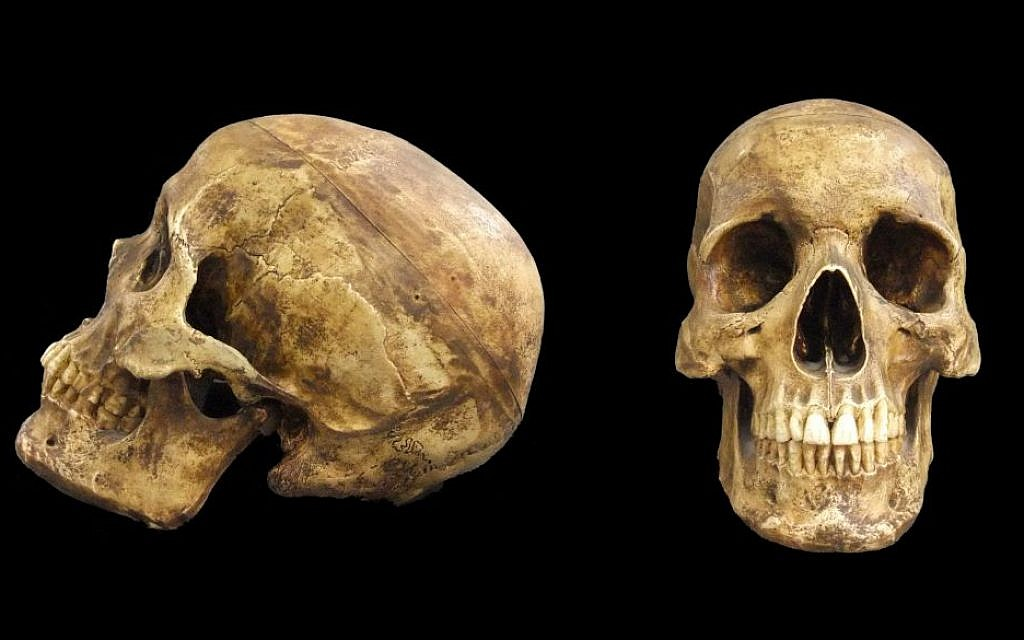A skull of Homo sapien, al-Kafza cave, Middle Paleolithic Period