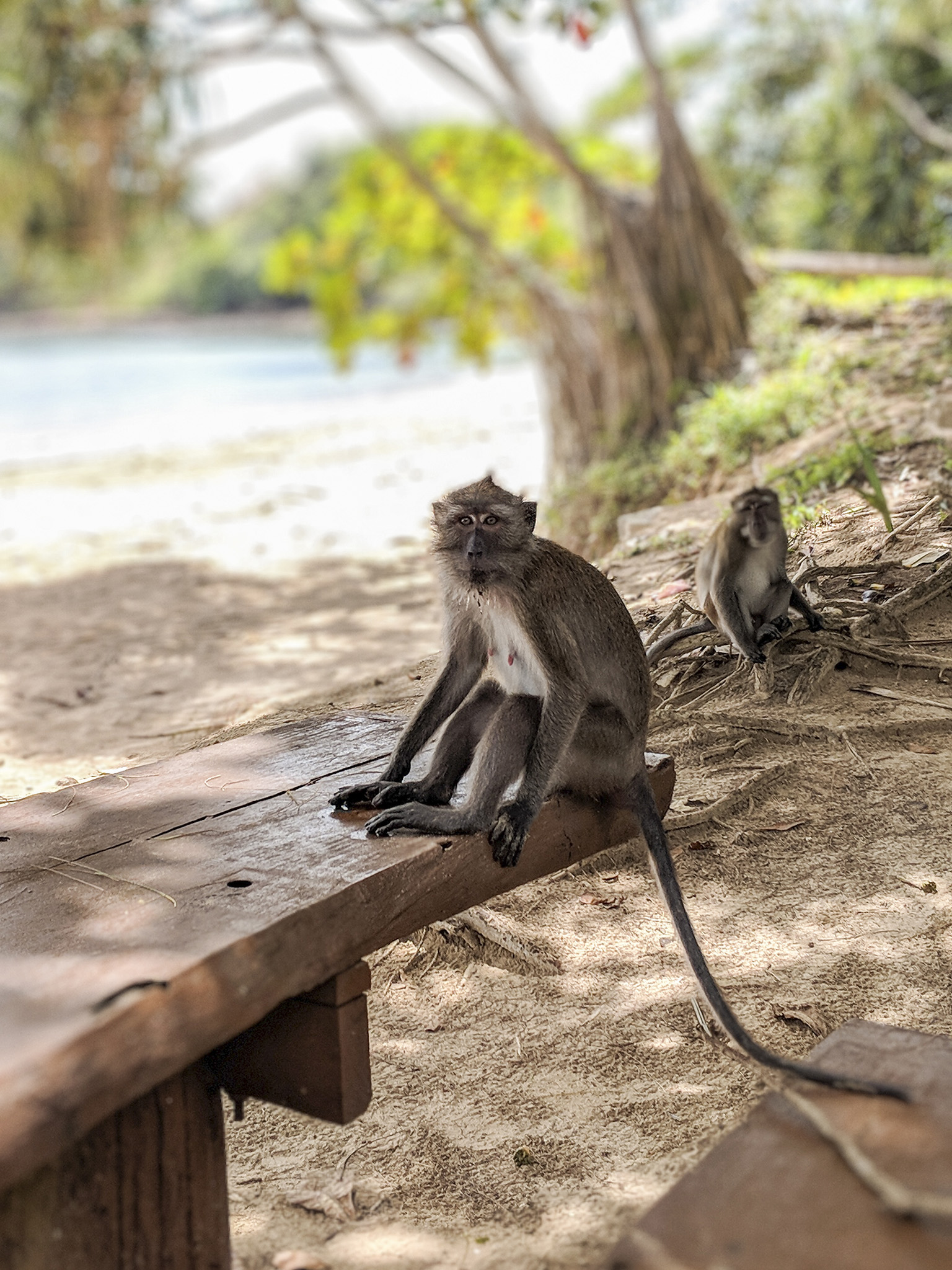 mischievous monkeys looking for a snack