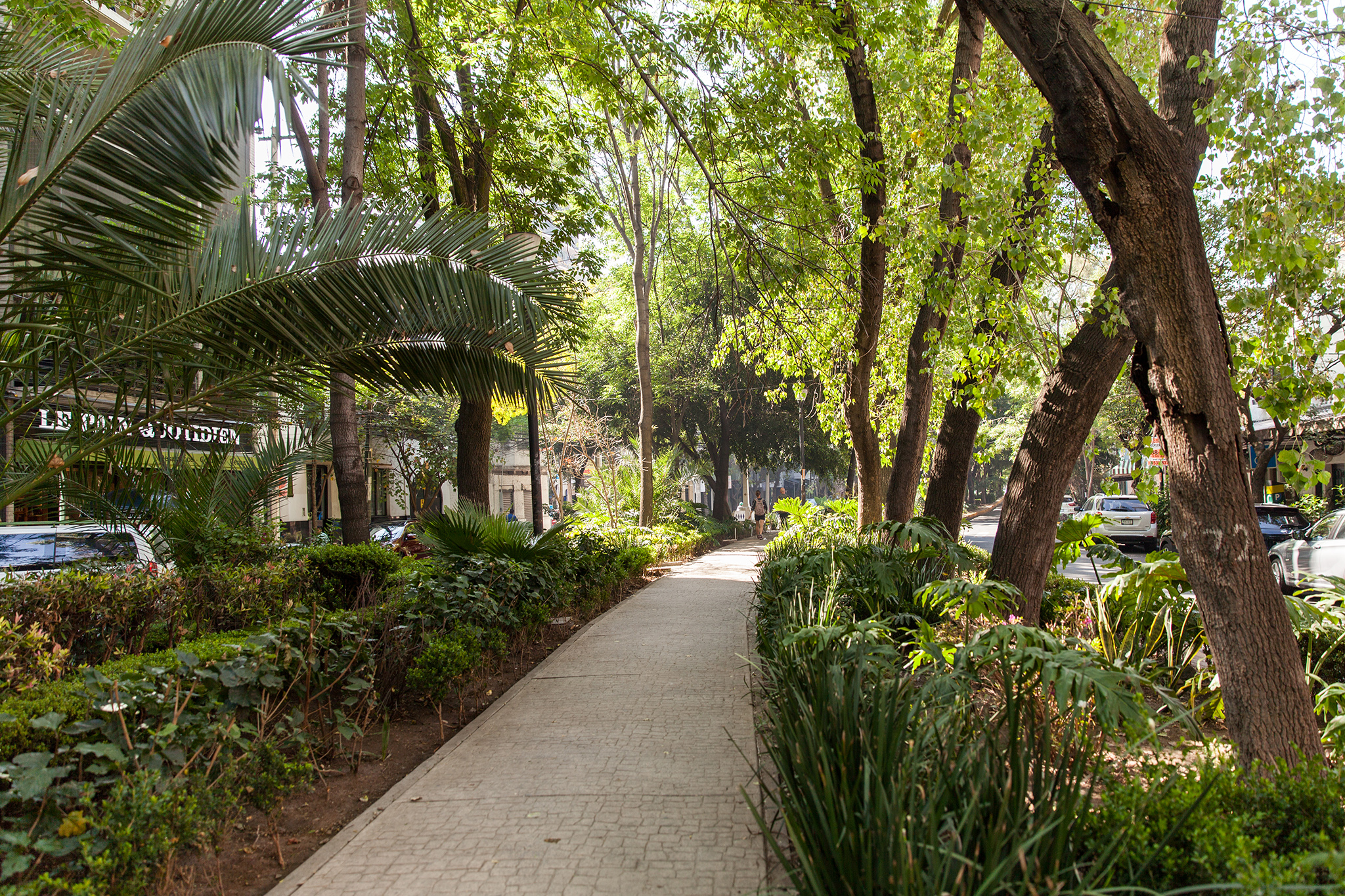 Beautifully manicured sidewalk parks zig zag across Roma Norte and Condesa
