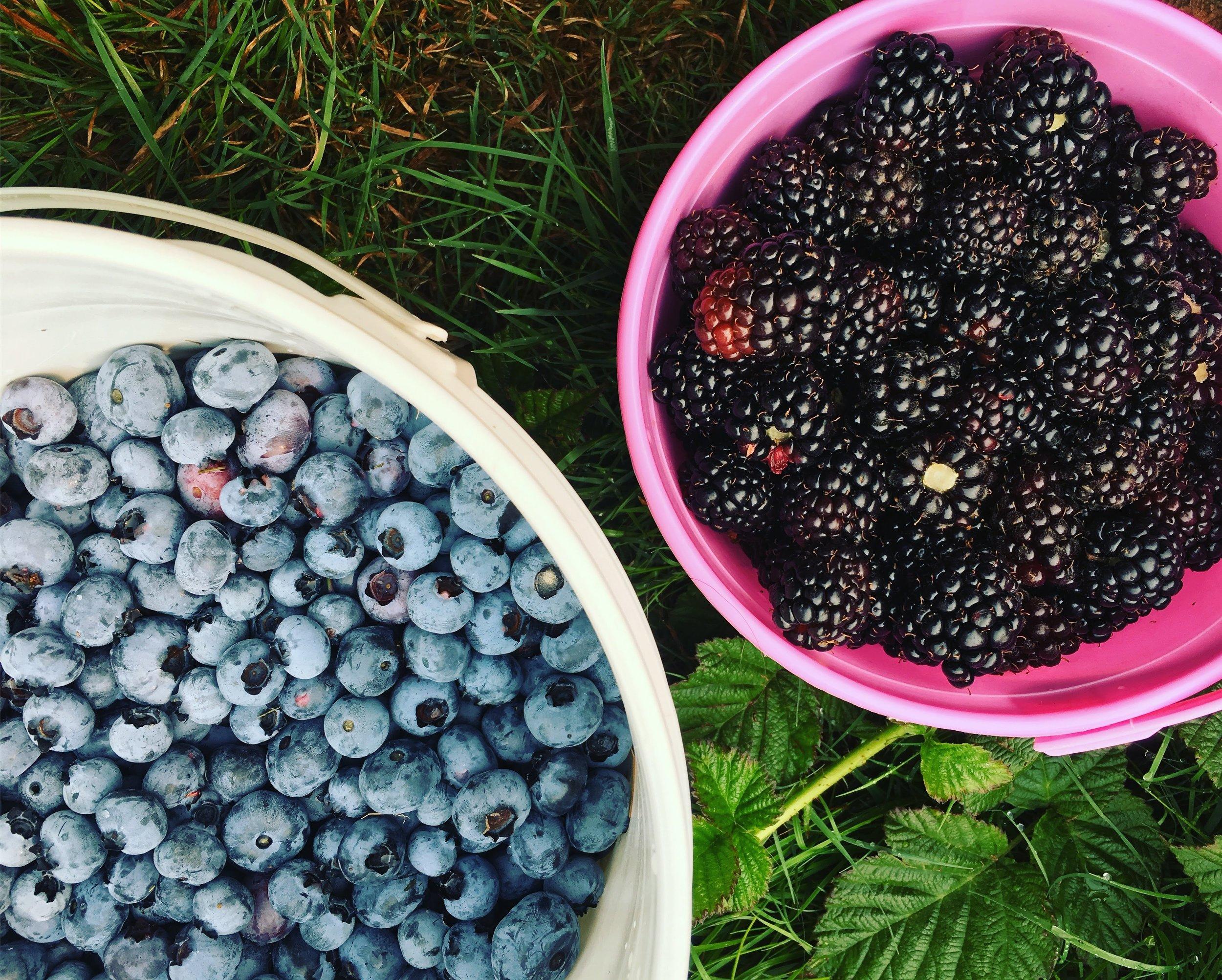 Blueberries and Blackberries.JPG
