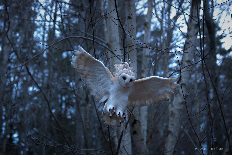 owl9.jpg